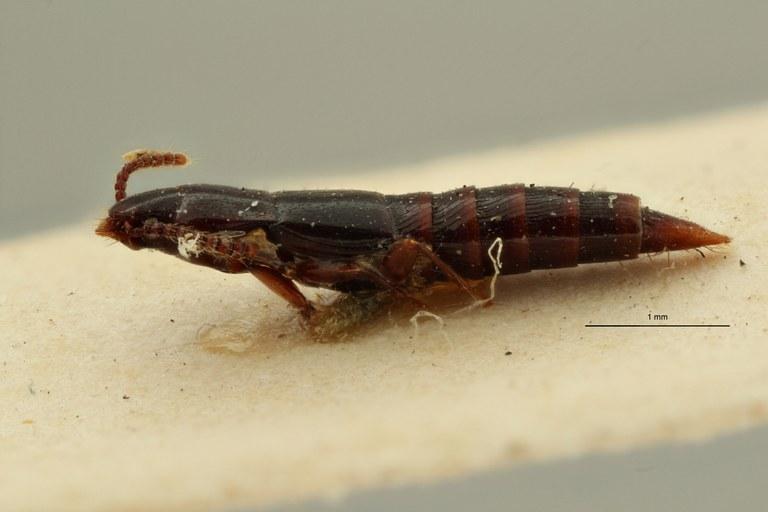 Holosus reticulatus pt L ZS PMax Scaled.jpeg