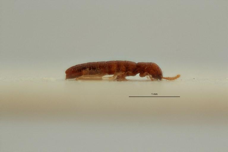 Lusitanopsis douroensis pt L ZS PMax Scaled.jpeg