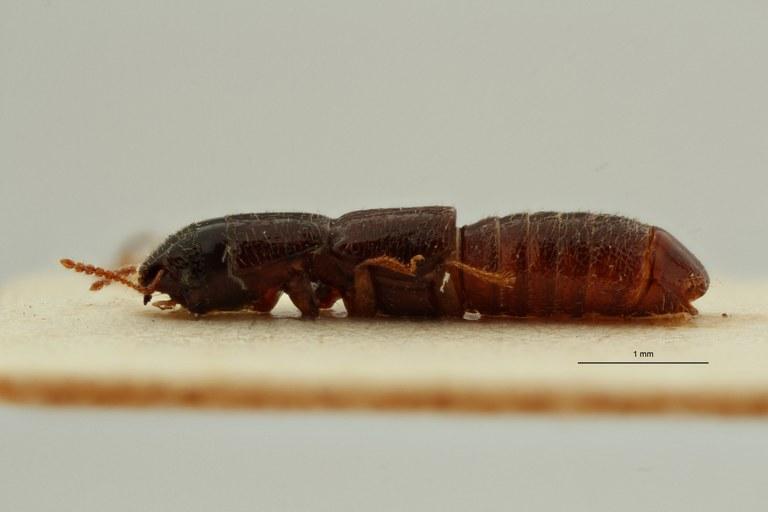 Neosorius angolanus pt L ZS PMax Scaled.jpeg