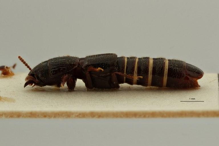 Neosorius hoyoensis pt L ZS PMax Scaled.jpeg