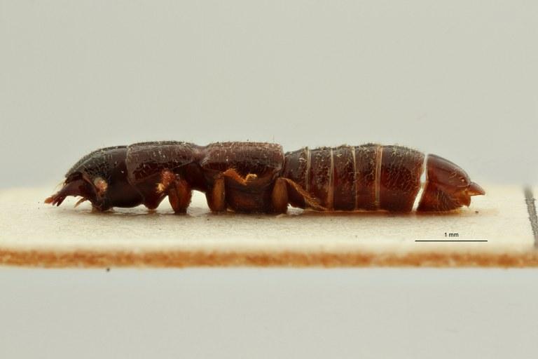 Neosorius kaleheanus pt L ZS PMax Scaled.jpeg