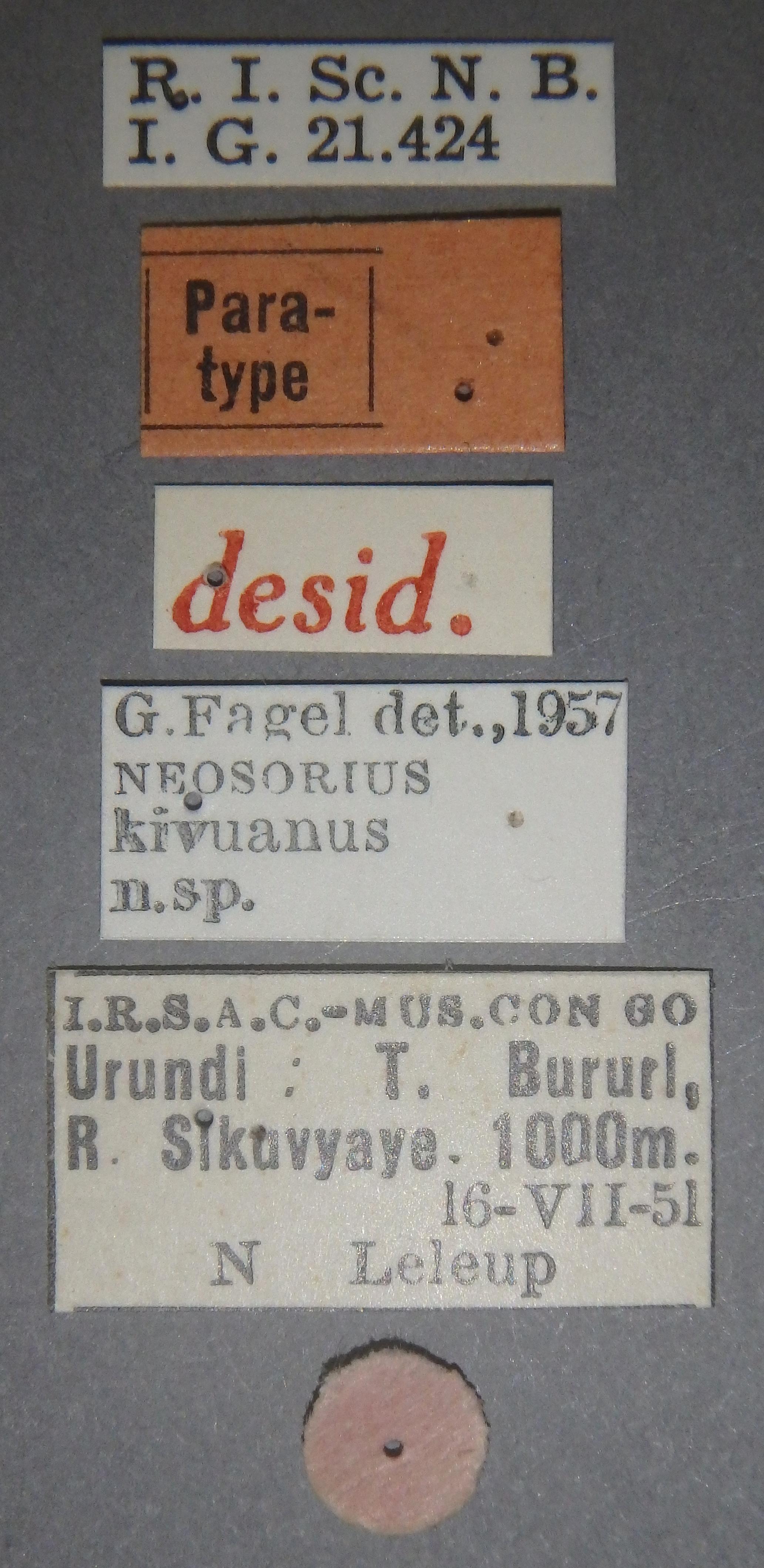 Neosorius kivuanus pt Lb.JPG