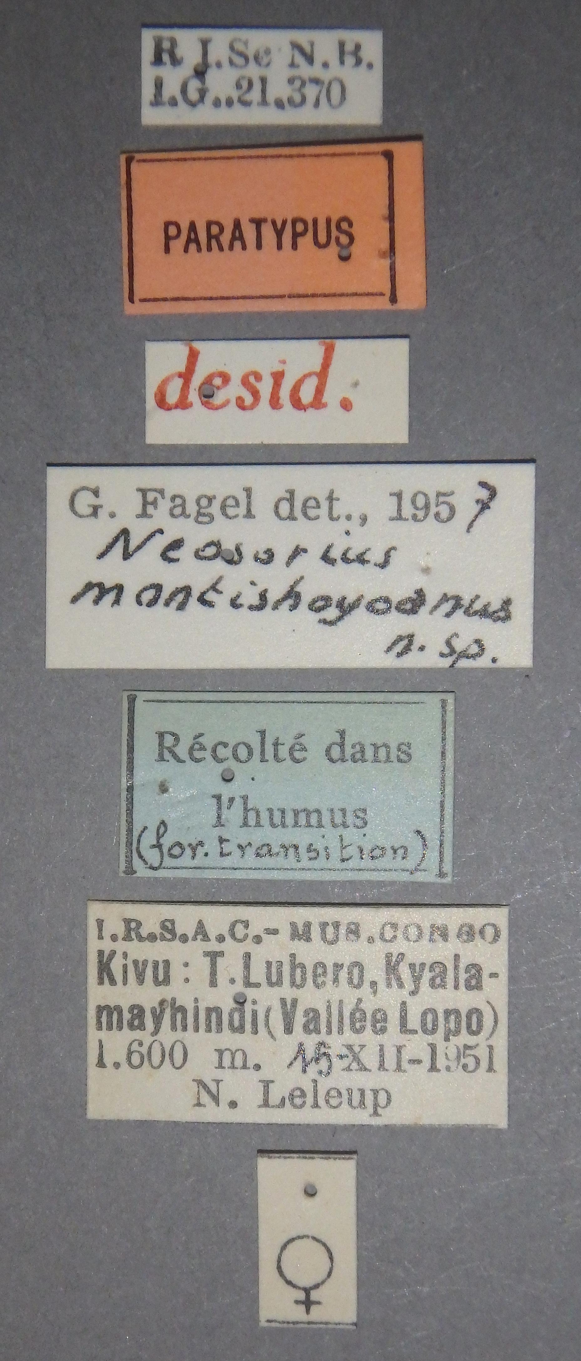 Neosorius montishoyoanus pt Lb.JPG