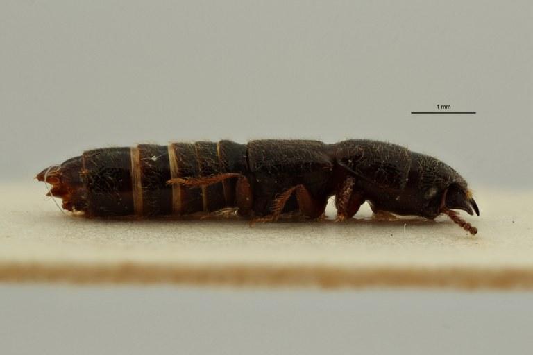 Neosorius mutakatoensis subspecies-kwangensis pt L ZS PMax Scaled.jpeg