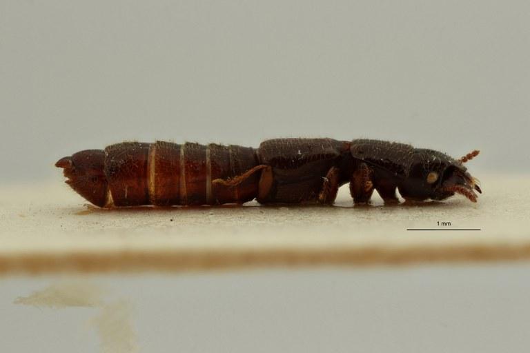 Neosorius nyakasibaensis pt L ZS PMax Scaled.jpeg