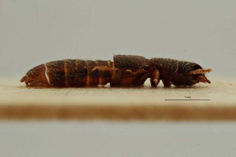 Neosorius pusillus pt L ZS PMax Scaled.jpeg