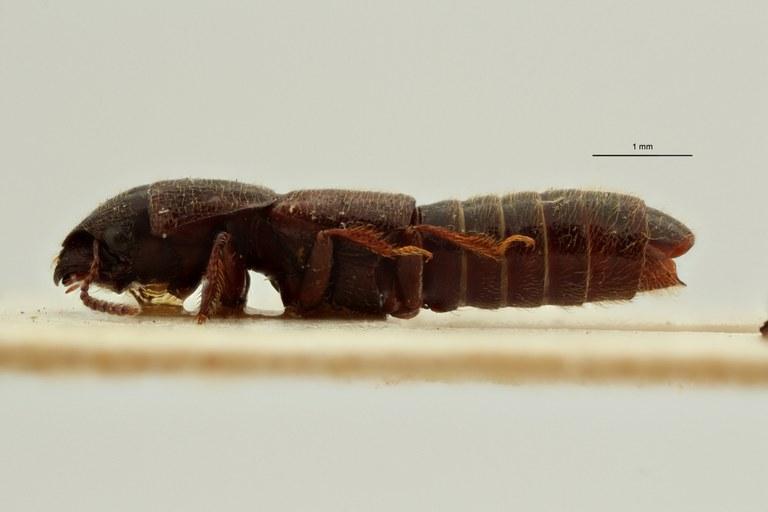 Neosorius wittei pt L ZS PMax Scaled.jpeg