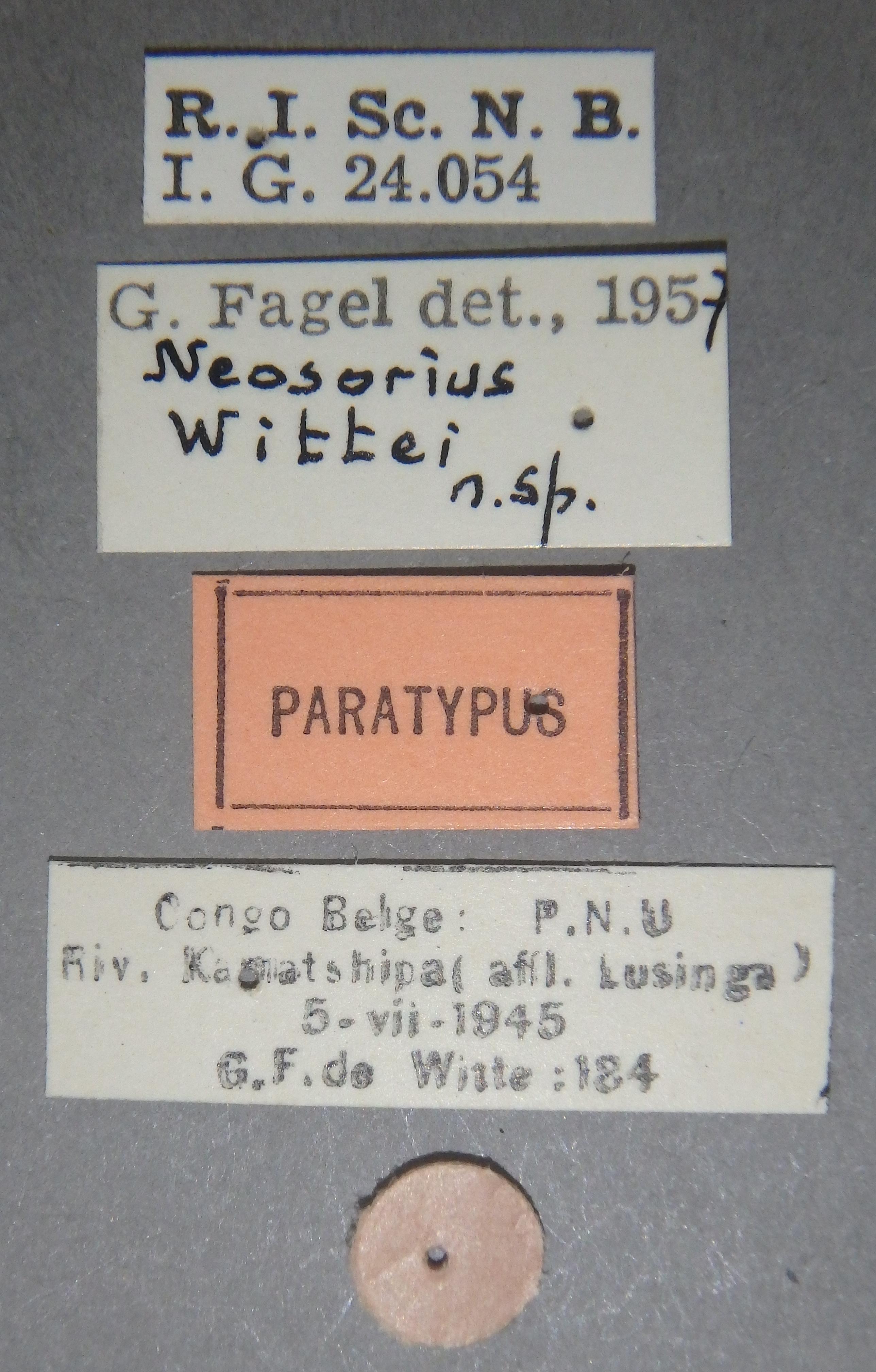 Neosorius wittei pt Lb.JPG
