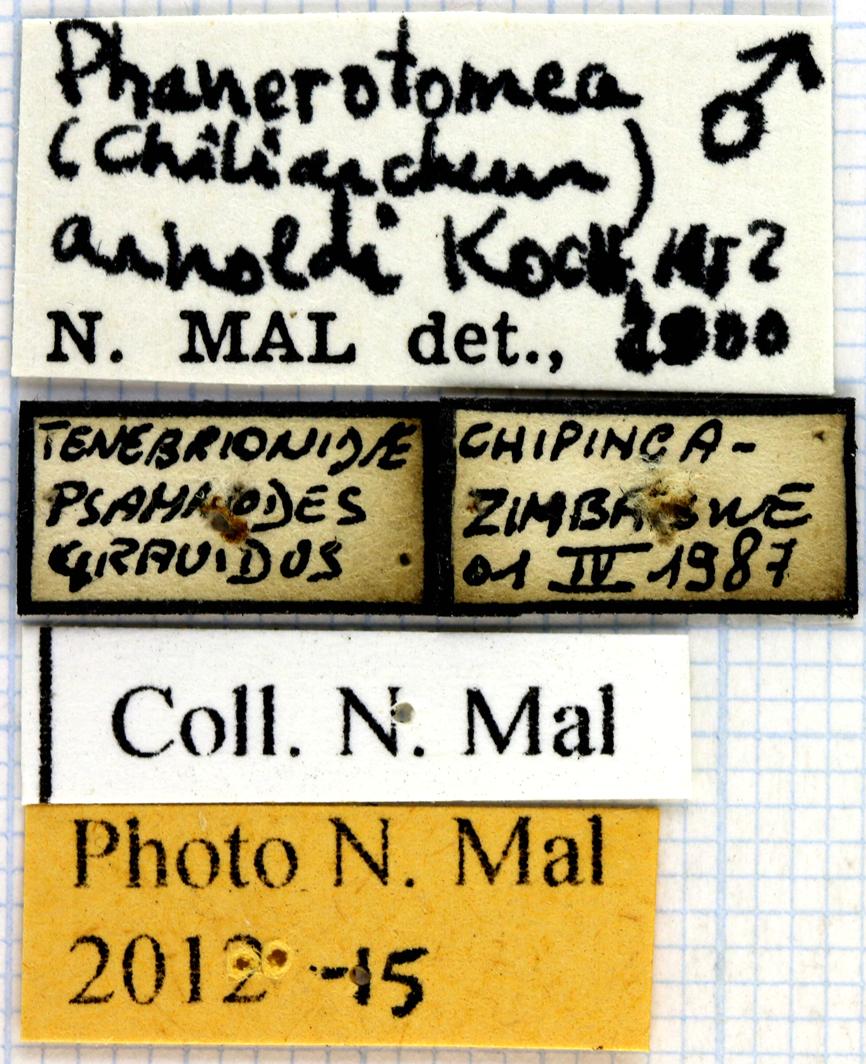 Phanerotomea arnoldi lables 64970.jpg