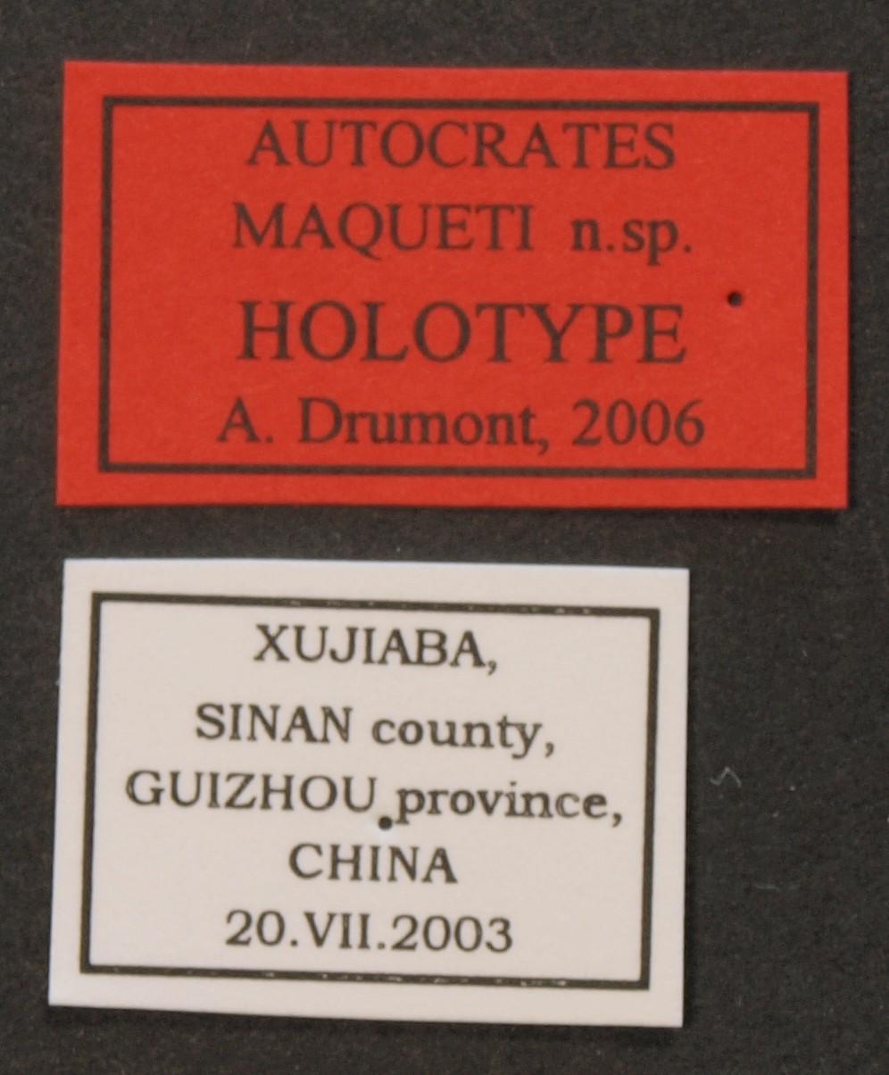 Autocrates maqueti ht Lb.JPG