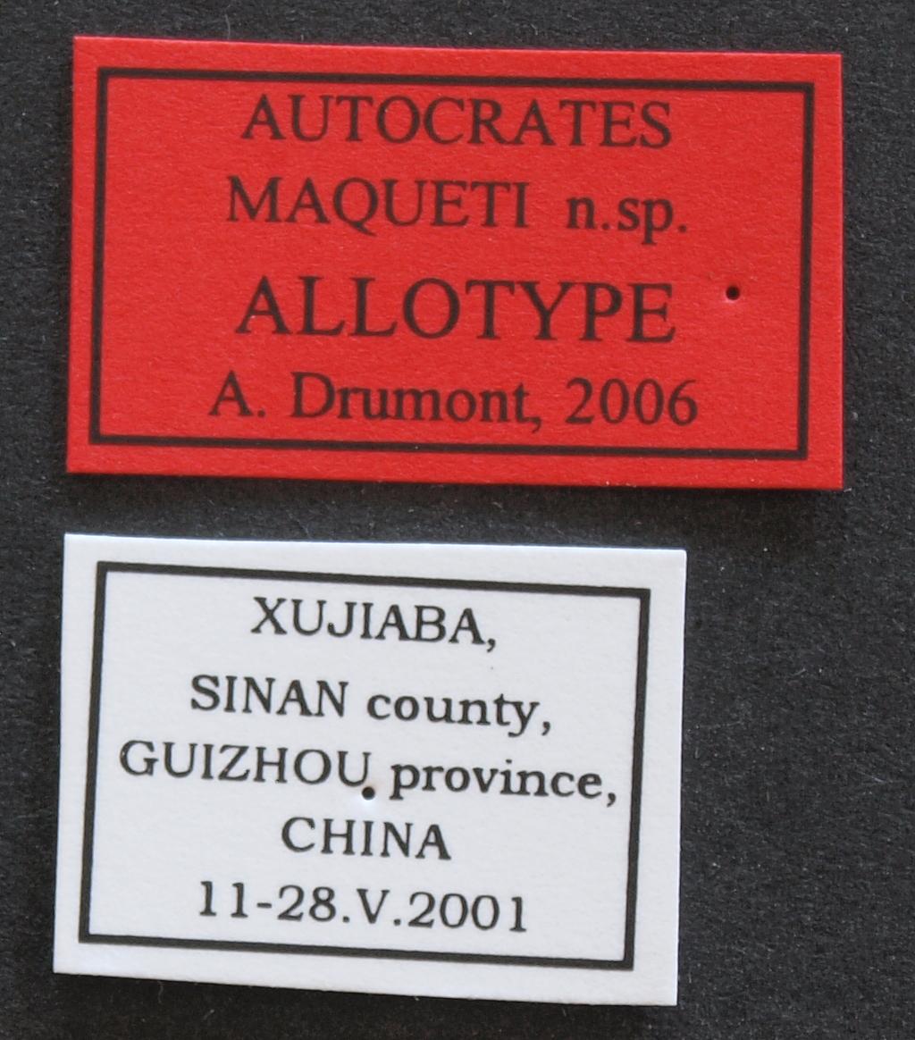Autocrates maqueti alt Lb.JPG