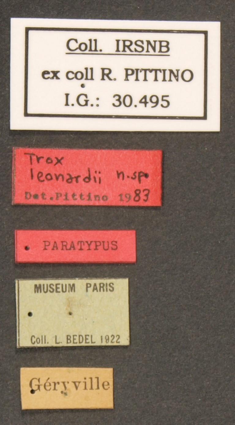 Trox leonardii pt Lb.JPG