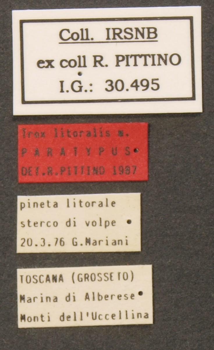 Trox littoralis pt Lb.JPG