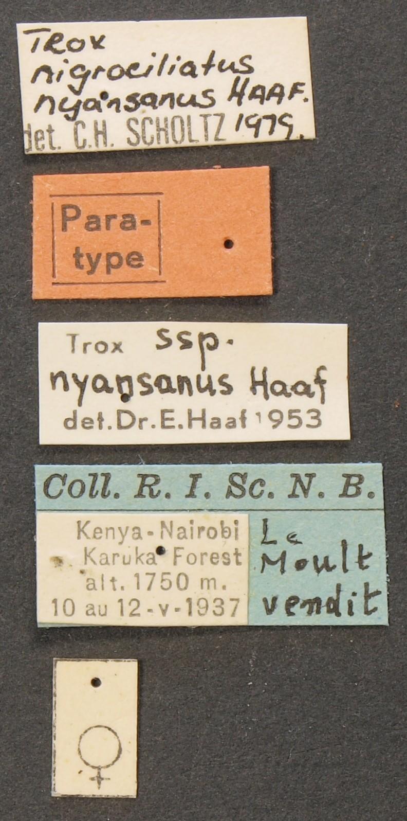 Trox nigrociliatus nyansanus pt Lb.JPG