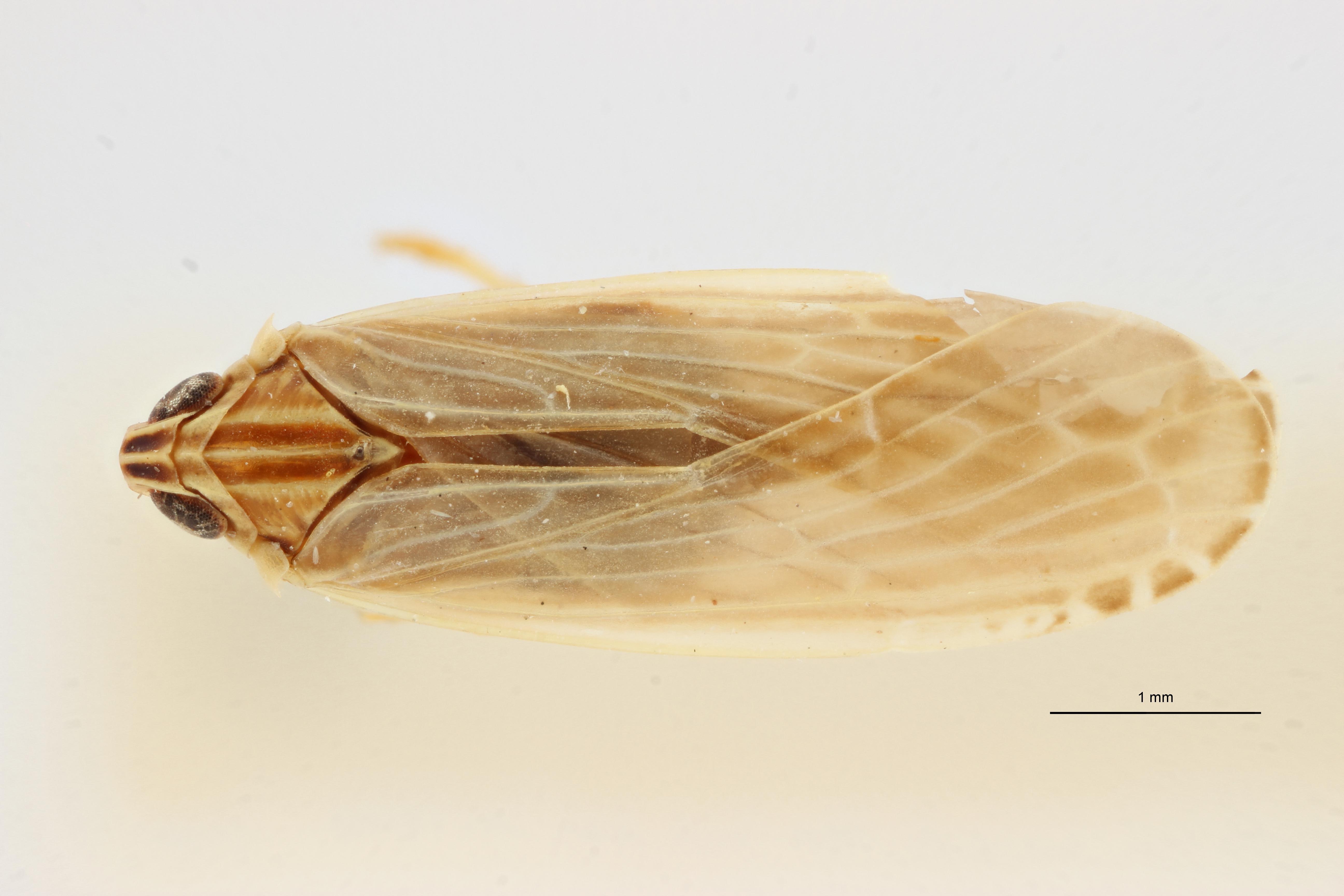 Ballomarius kabashensis pt2 D ZS PMax Scaled.jpeg