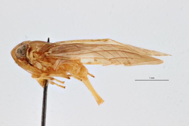 Cnidus akaensis pt L ZS PMax Scaled.jpeg