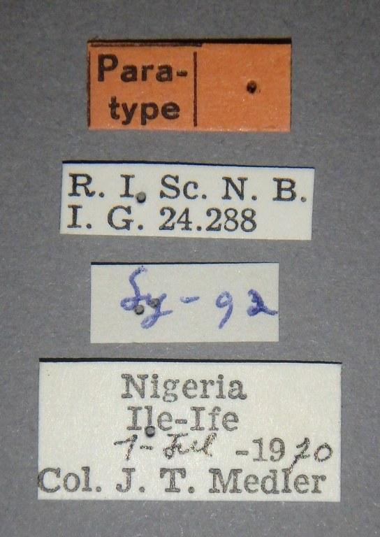 Cnidus candidus pt Lb.JPG