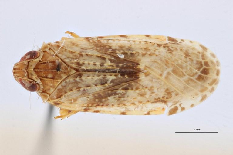Cnidus morosus pt D ZS PMax Scaled.jpeg