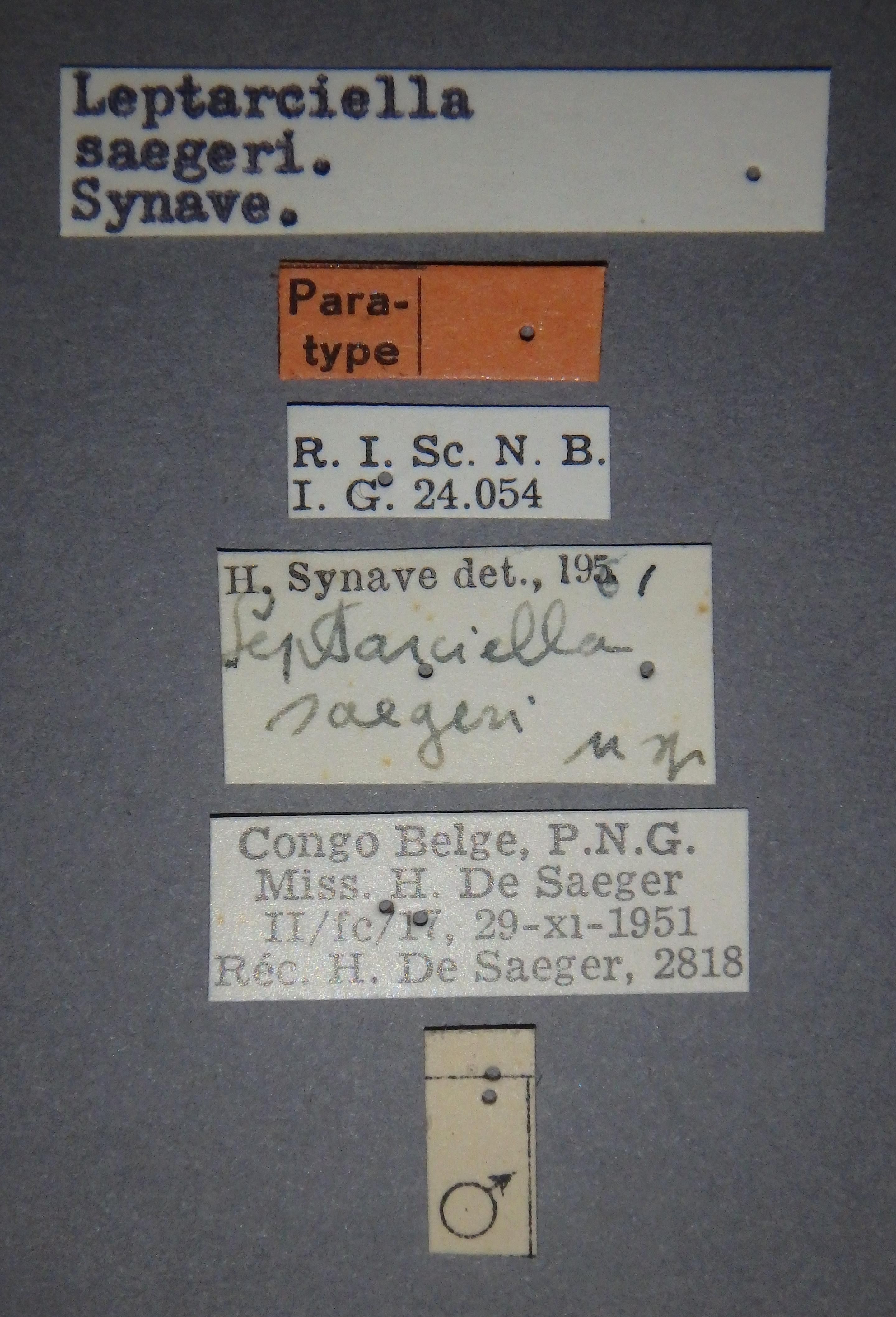 Leptarciella saegeri pt2 Lb.JPG