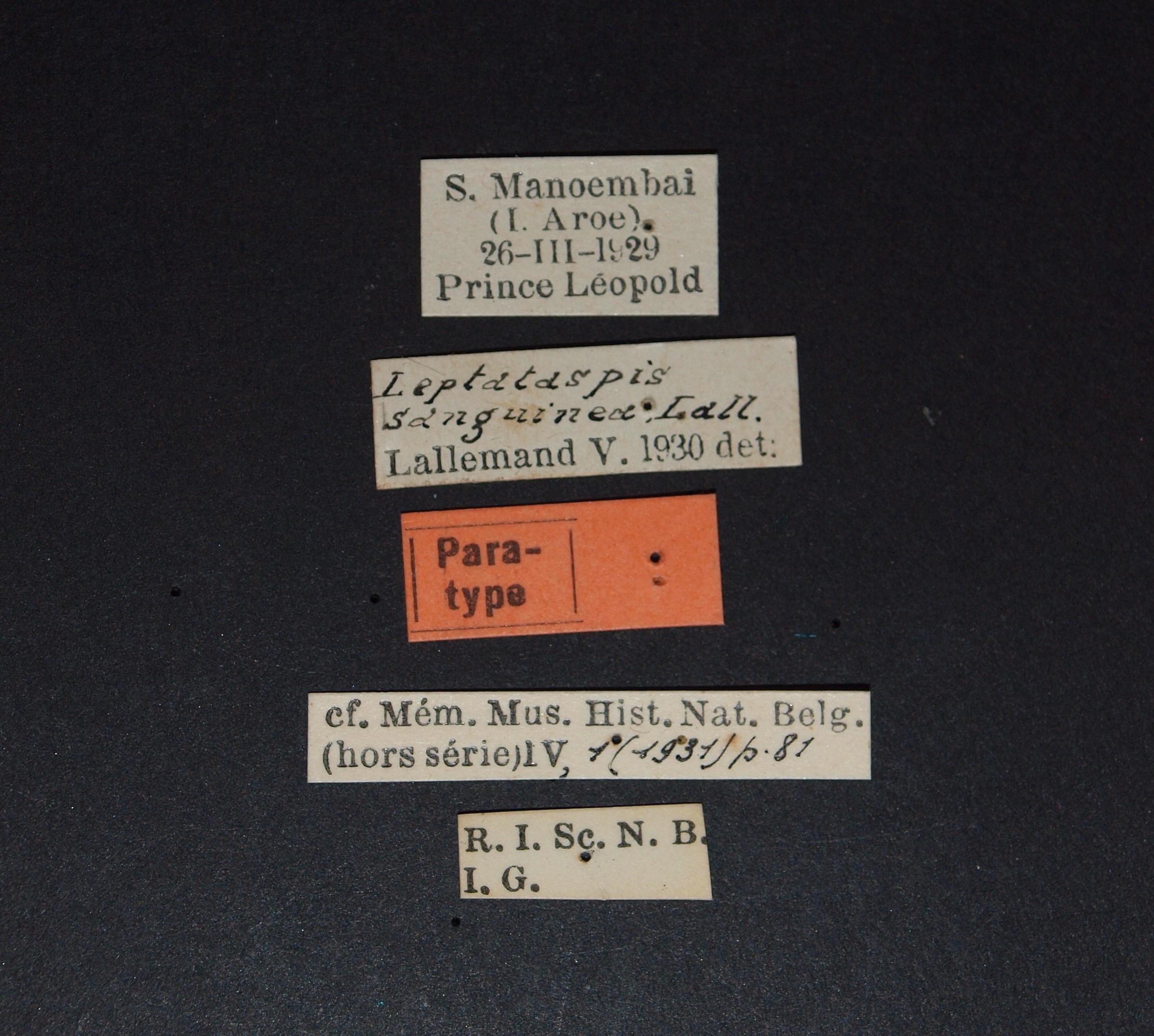 Leptataspis sanguinea pt.JPG
