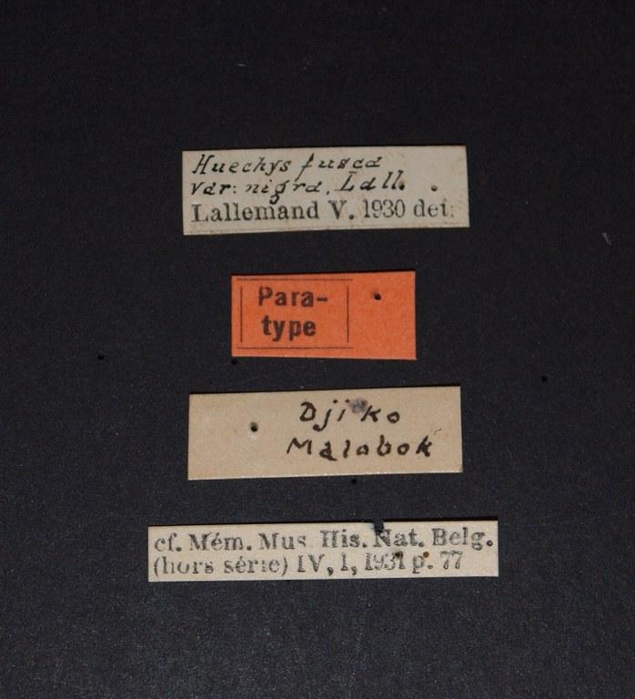 Huechys fusca nigra pt.JPG