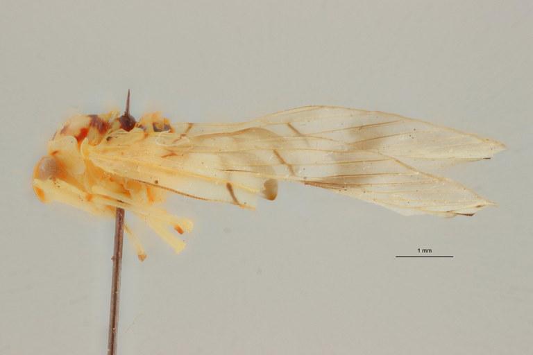 Diostrombus dedegwanus pt L ZS PMax.jpg Scaled.jpeg
