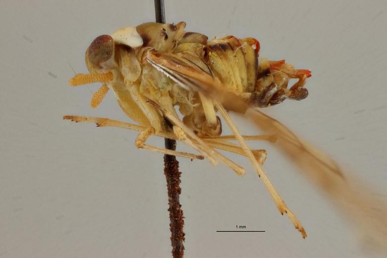 Neodiostrombus punctatus pt L ZS PMax Scaled.jpeg