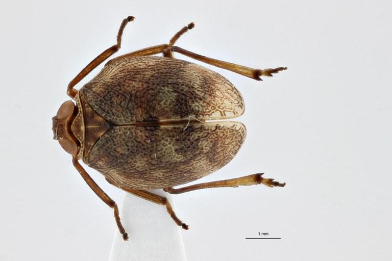 Gergithoides nui pt D ZS PMax.jpg