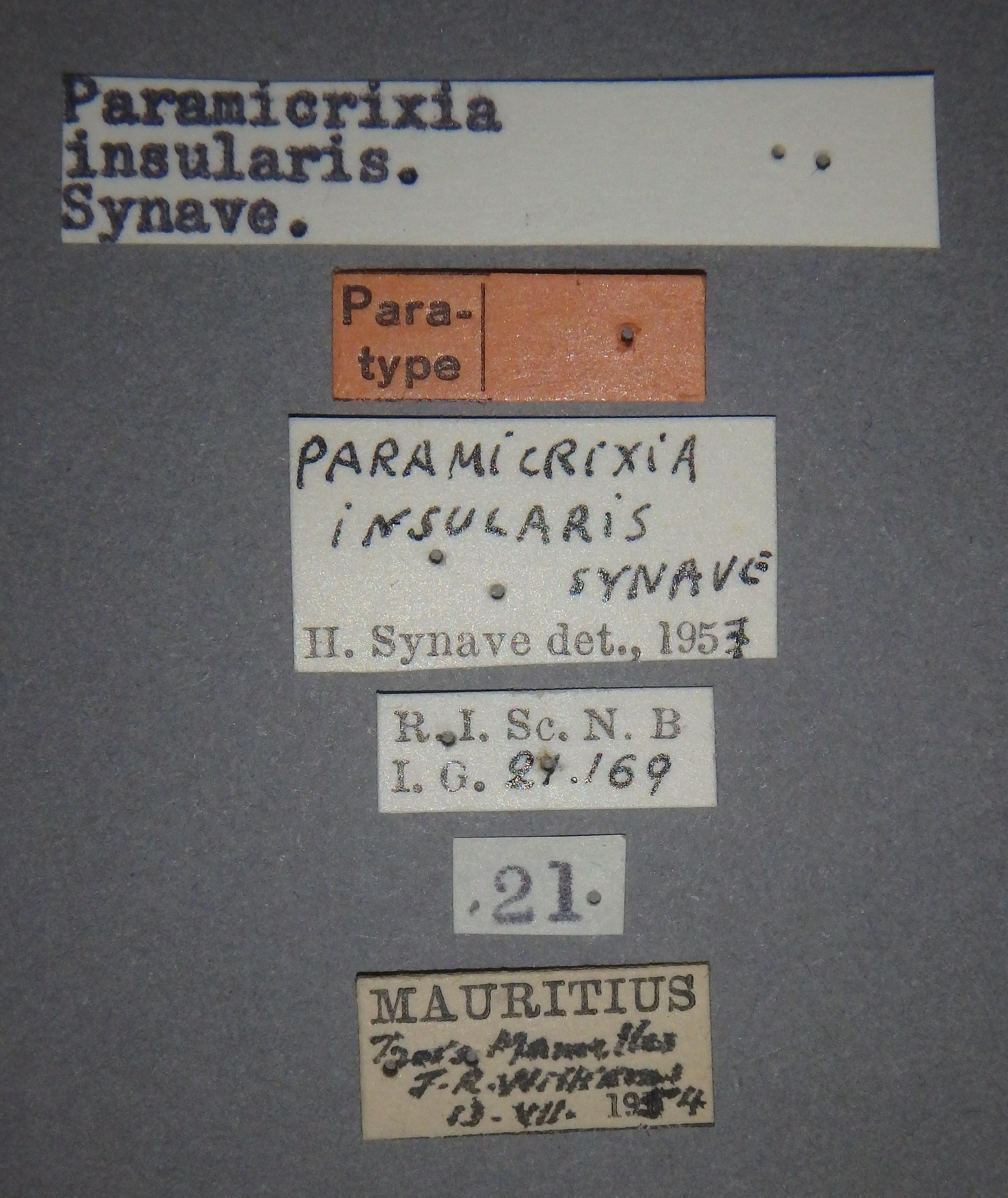 Paramicrixia insularis pt2 Lb.JPG