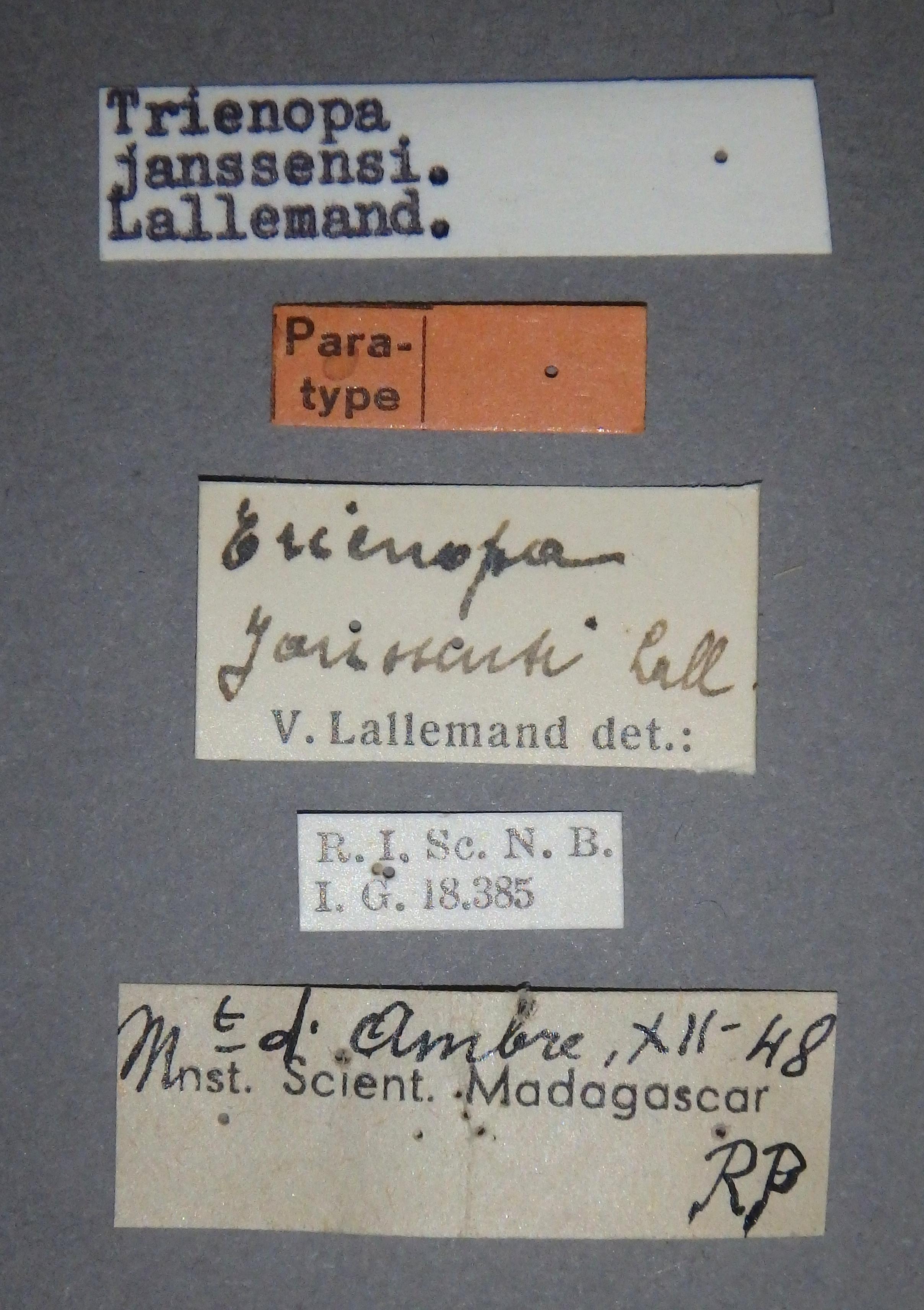 Trienopa janssensi pt2 Lb.JPG