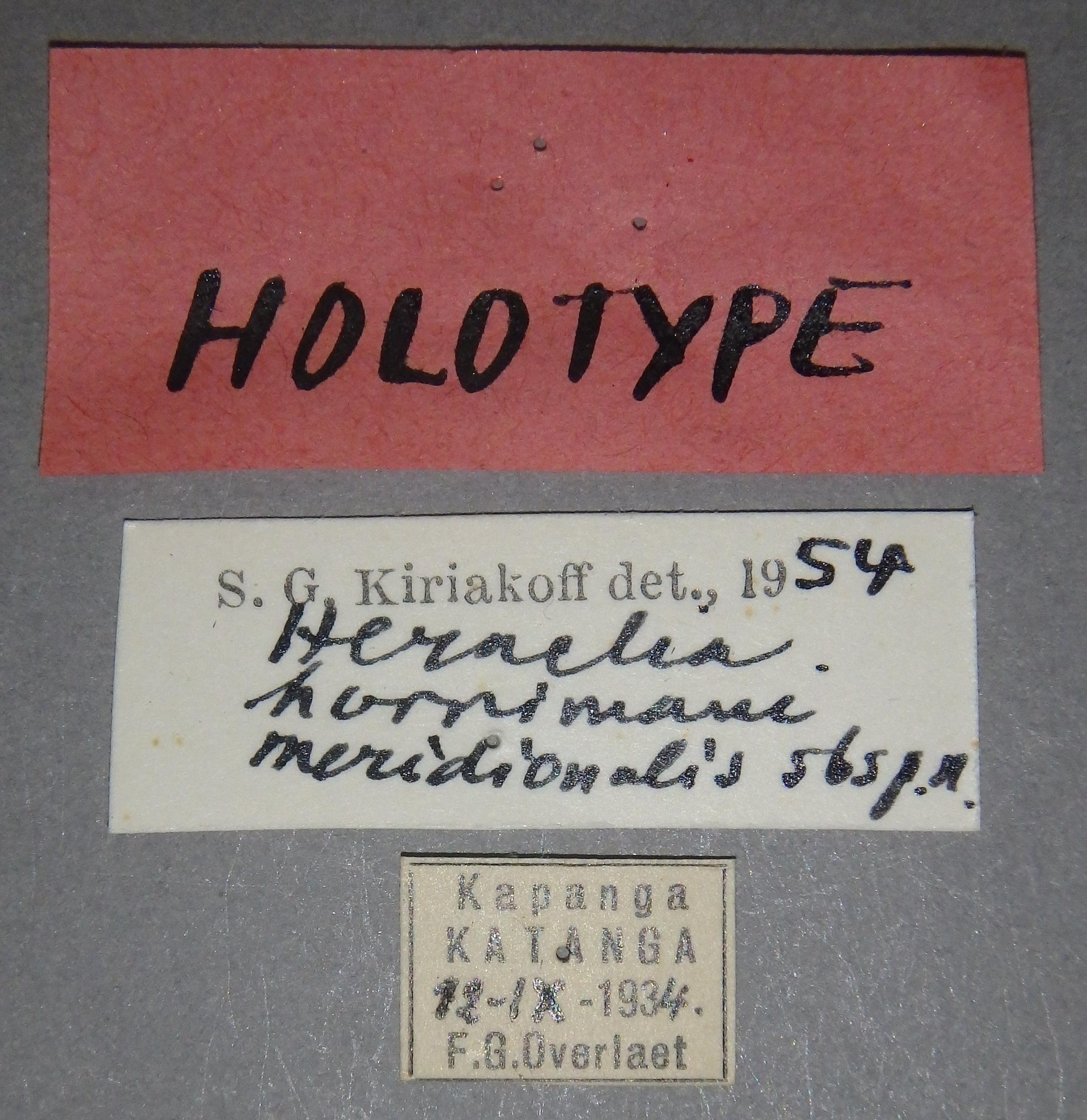 Heraclia hornimani meridionalis ht Lb.JPG