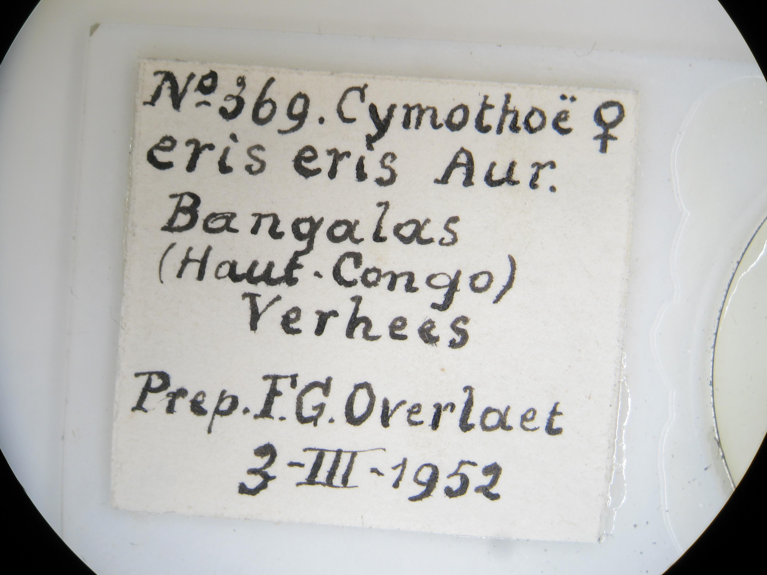 Cymothoe eris na F G Lb2.JPG