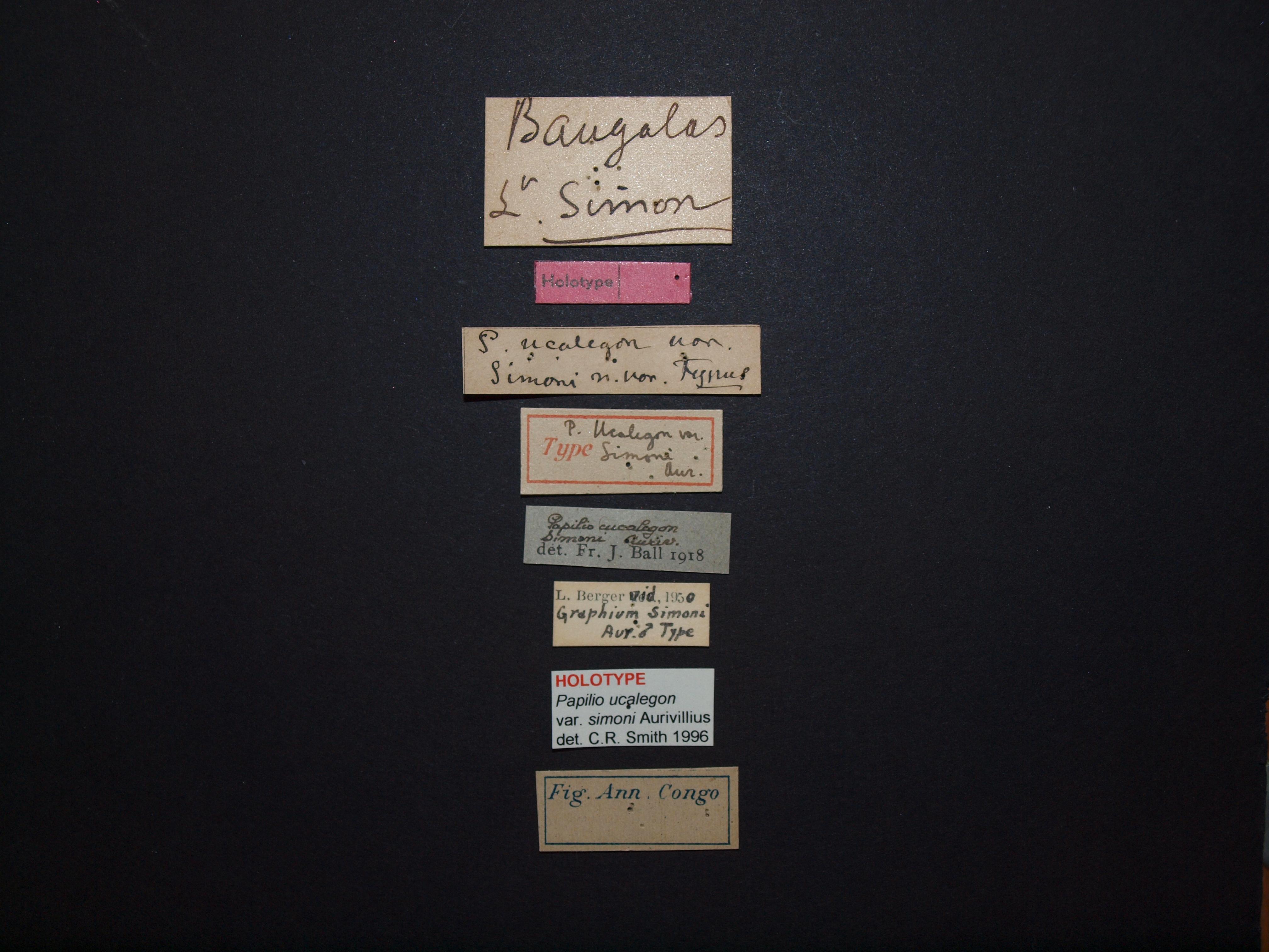 Papilio ucalegon var simoni M ht Labels.JPG