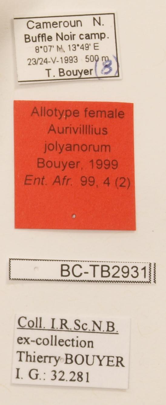 Aurivillius jolyanorum F Allotype Labels.jpg