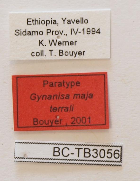 Gynanisa maja terrali F pt Labels.JPG
