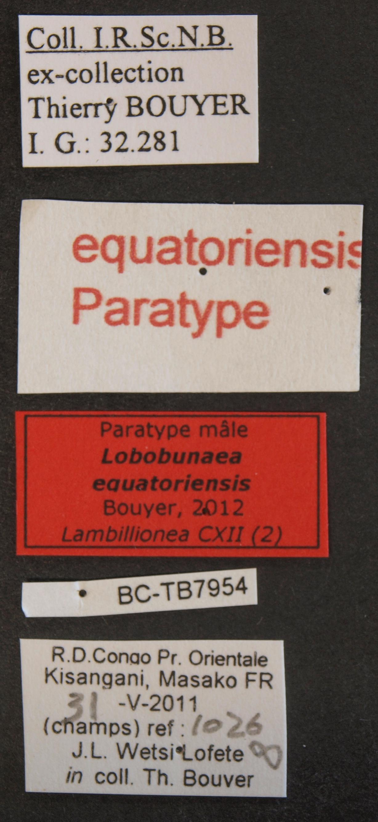 Lobobunaea equatoriensis pt M Lb.JPG