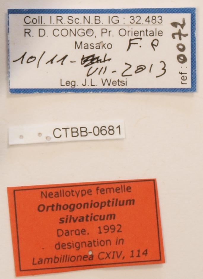 Orthogonioptilum silvaticum F Labels.JPG