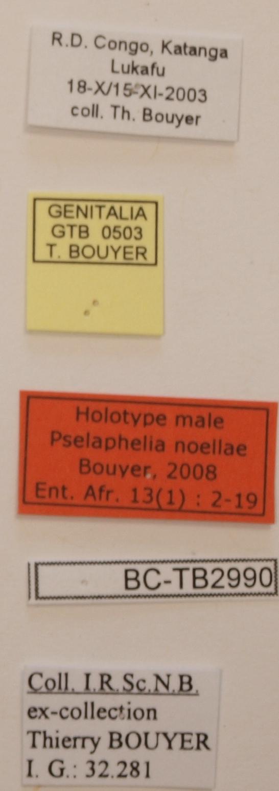 Pselaphelia noellae M Labels o.JPG