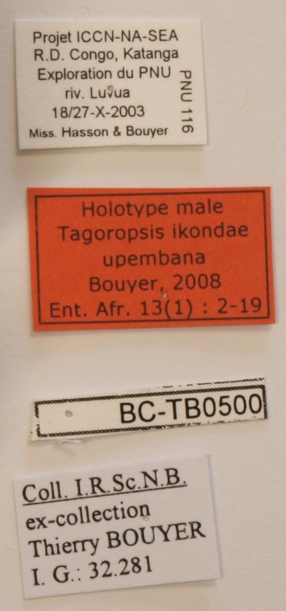 Tagoropsis ikondae upembana M Labels ZS PMax.jpg
