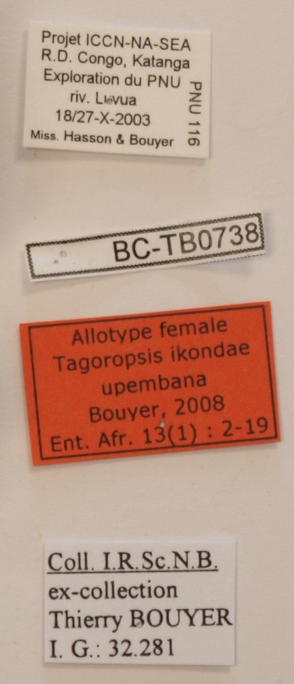 Tagoropsis ikondae upembana F Labels.JPG