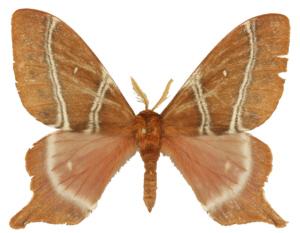 specimen.jpg