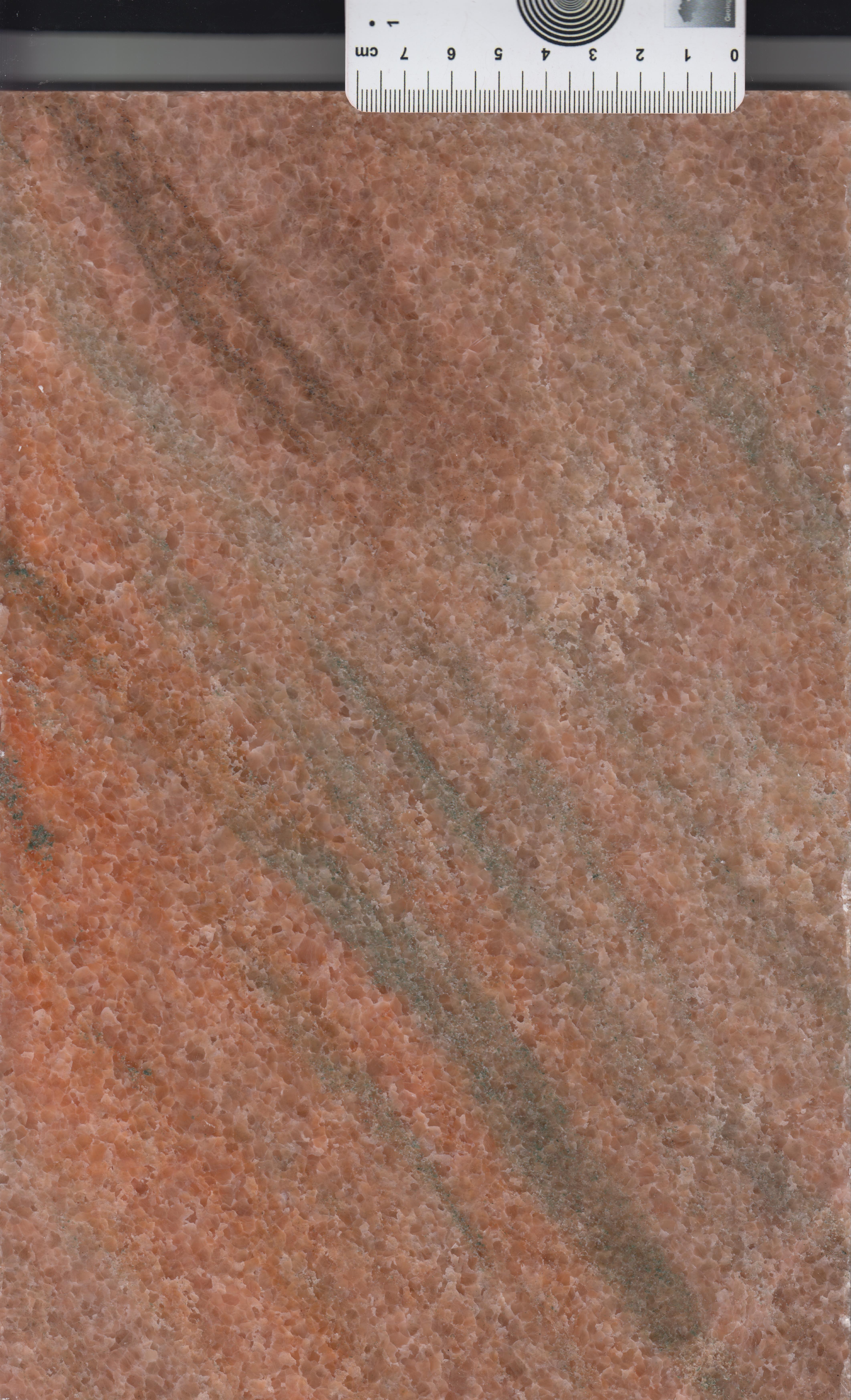 Rose Kara soudan M1285