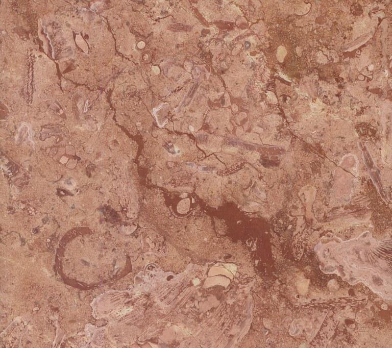 Roja Campina GR1003