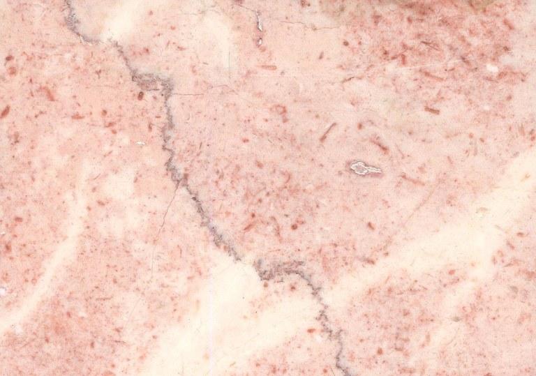 Orquidea Sierra M881