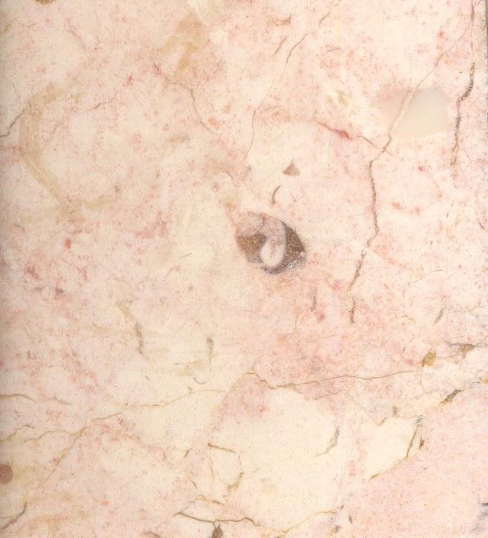 Rosa Aurora M995