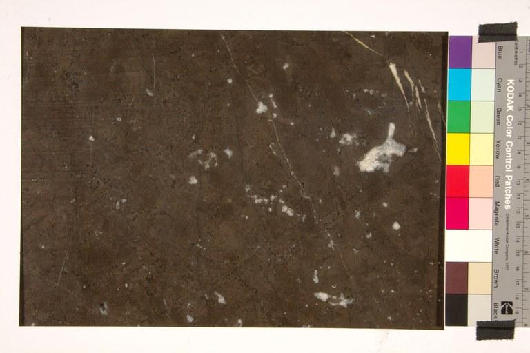 Noir de Saint-Jean - Coquillé Clair A20
