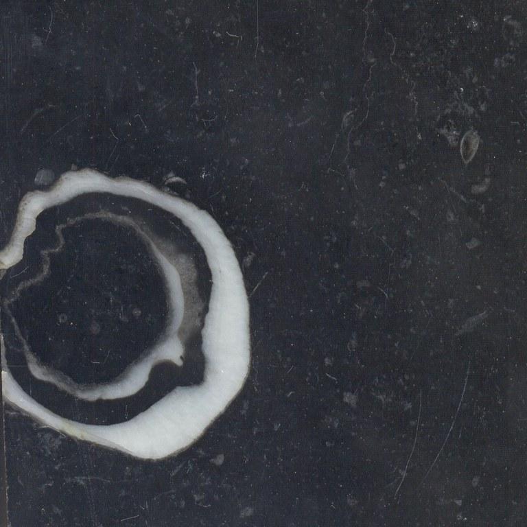 Carlow Fossil Limestone M1073
