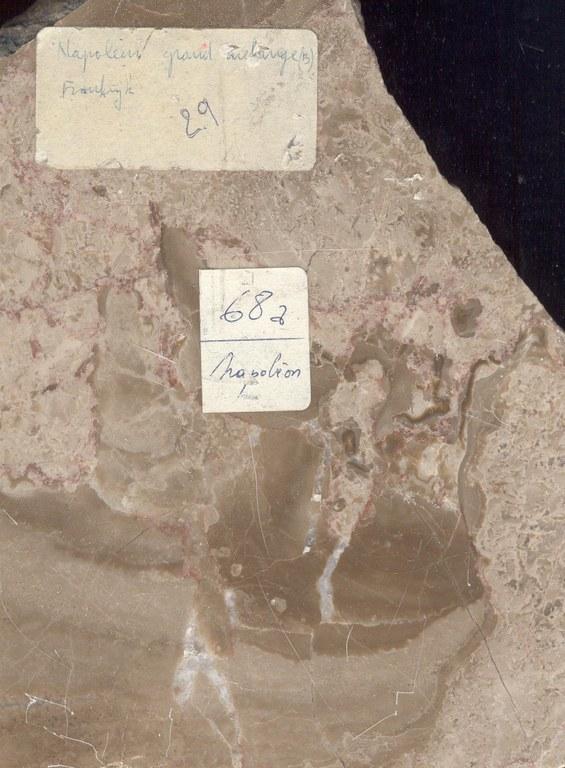 Napoleon-Grand-Melange M343