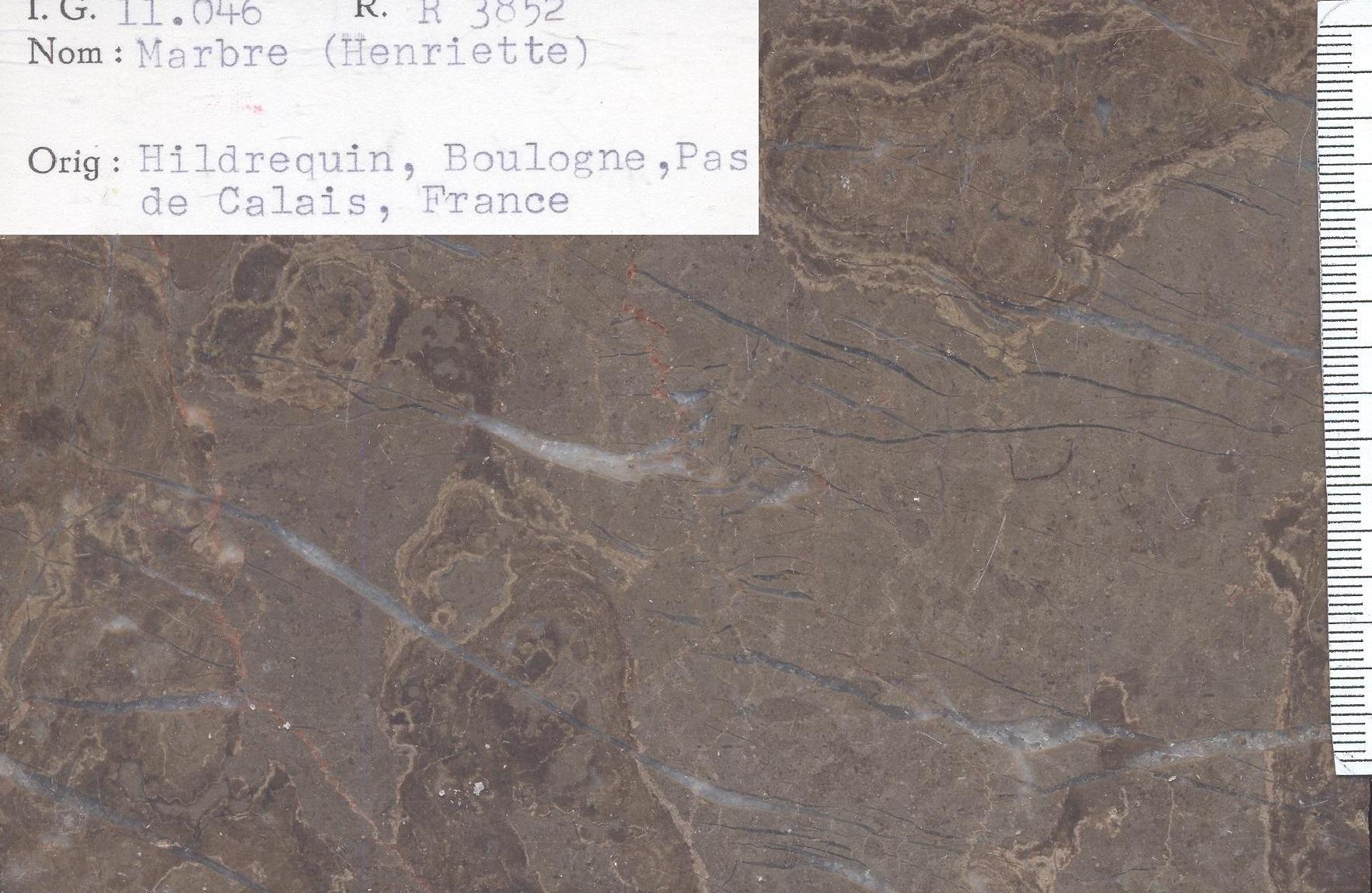 Boulonnais Henriette RR3852