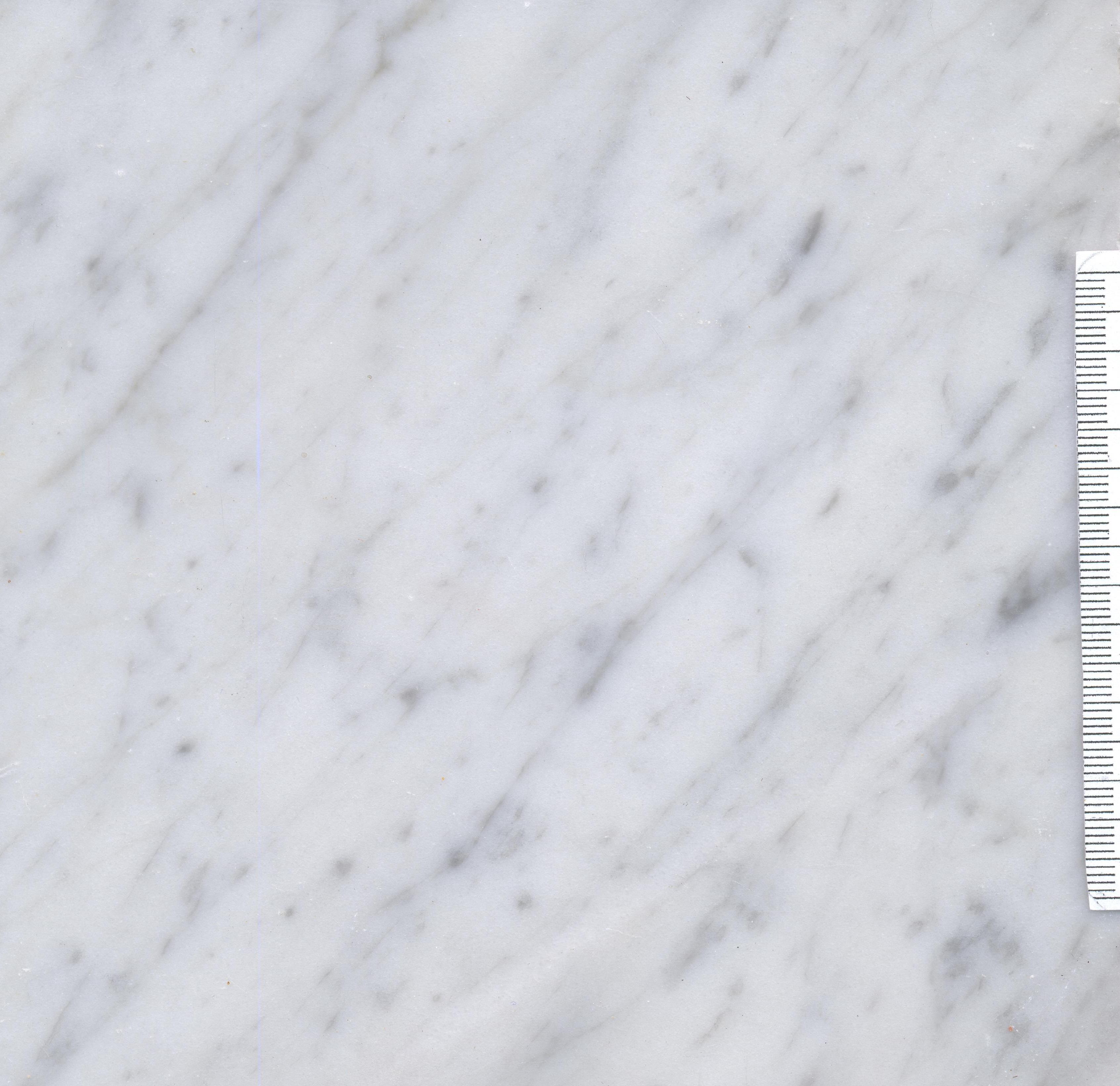 Carrara C M1356